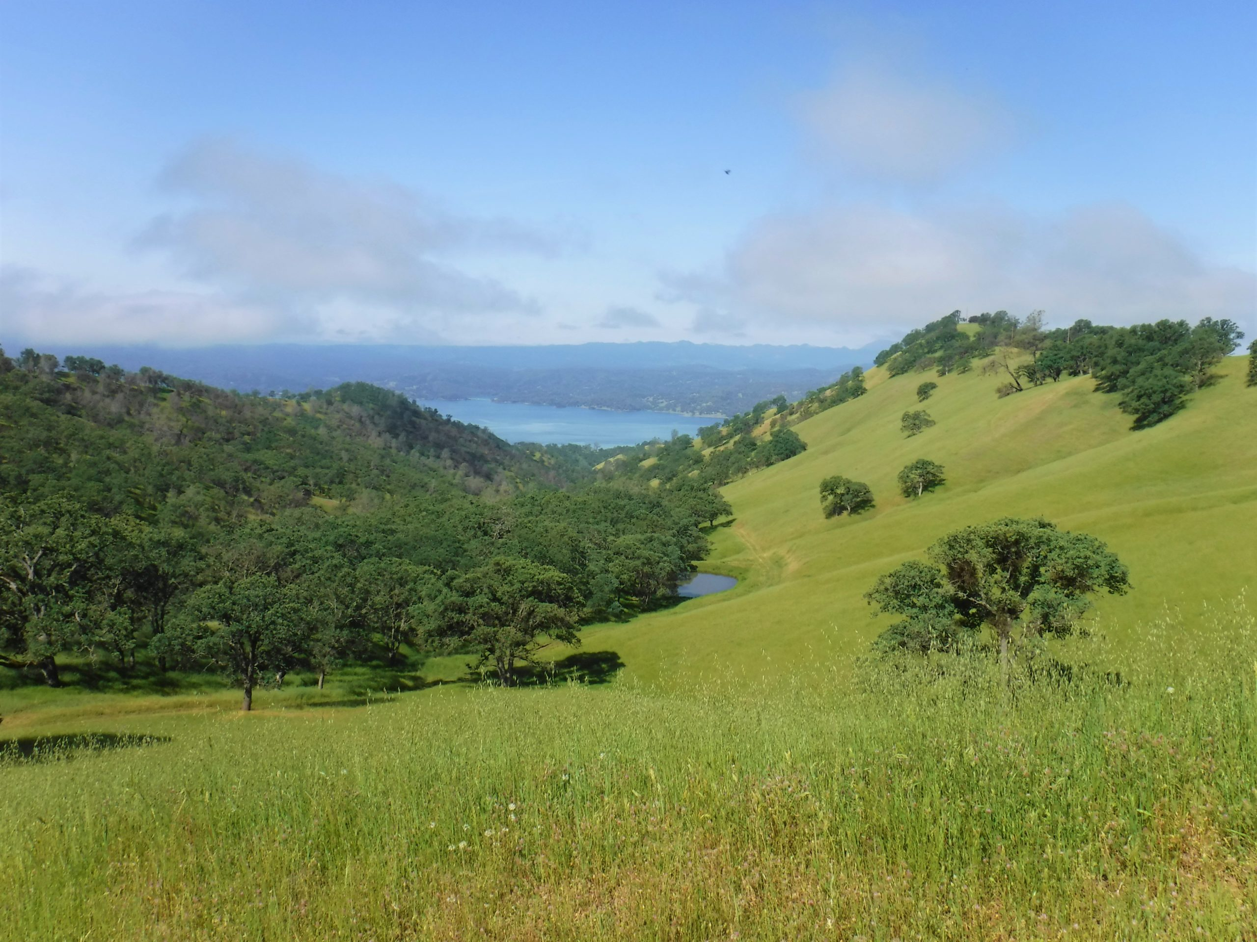 Image of Running Deer Ranch with Lake Berryessa in the Background