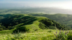 Image of Green Hills