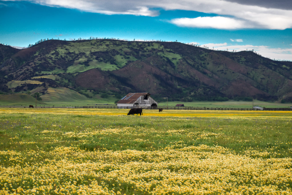 Image of yellow flower field