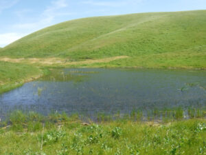 Image of pond at Marciel Ranch