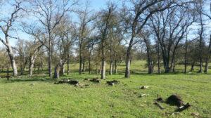 Image of oak grove at Oak Canyon Ranch