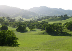 Image of green field at Rominger Ranch