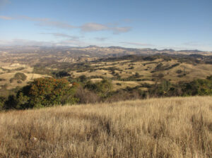 Image of tall grass hills at Wilmar Ranch