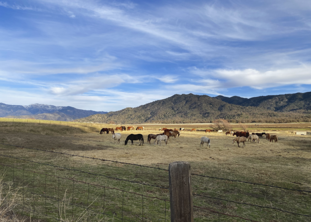Horses grazing on the Bufford Ranch