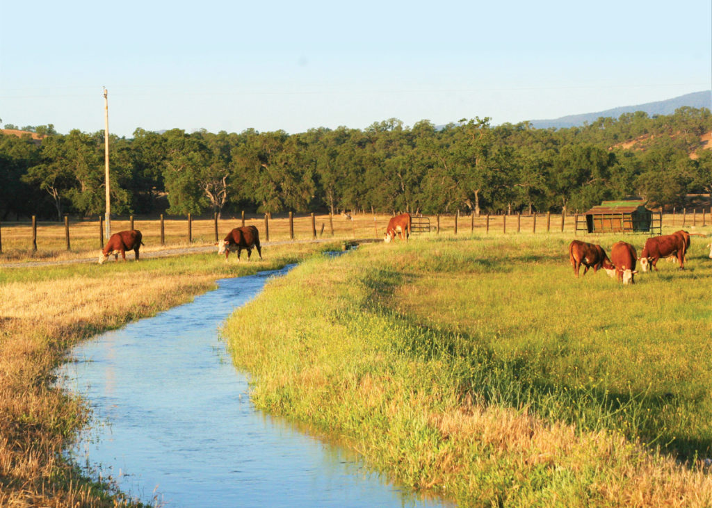 image of cows and canal