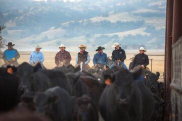 Image of cowboys on horseback